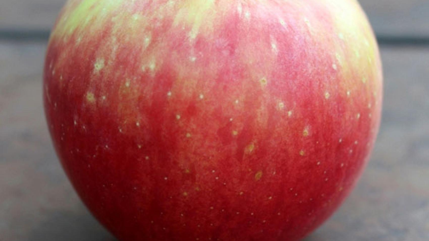 Zestar-Apples